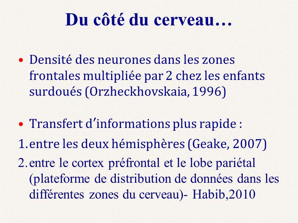Du côté du cerveau… Densité des neurones dans les zones frontales multipliée par 2 chez les enfants surdoués (Orzheckhovskaia, 1996) Transfert d'infor
