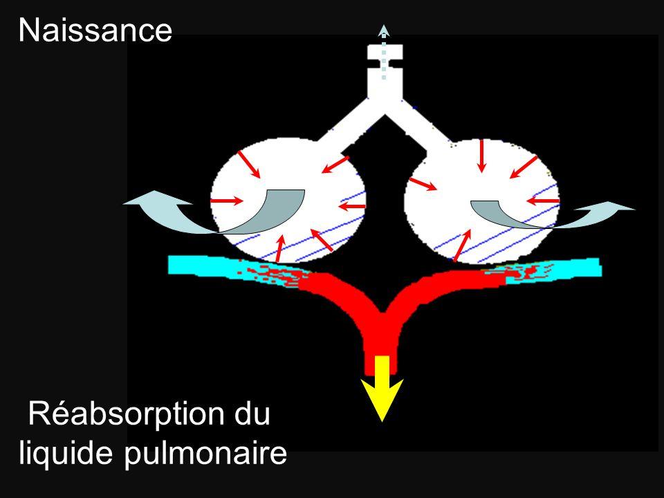 Réabsorption du liquide pulmonaire Naissance