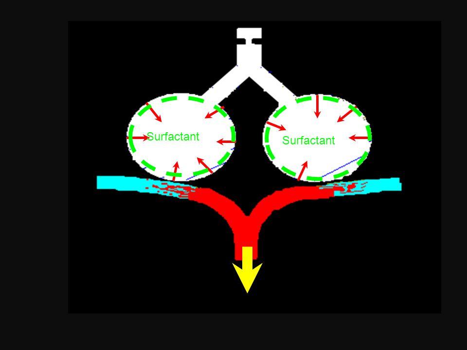 ADAPTATION RESPIRATOIRE A LA NAISSANCE ELIMINATION DES LIQUIDES INTRA-PULMONAIRES : 2/3 expulsés lors de la compression du thorax dans la filière génitale AÉRATION DES ALVÉOLES PULMONAIRES MAINTIEN DES ALVÉOLES OUVERTES EN FIN D'EXPIRATION  SURFACTANT AUGMENTATION DU DÉBIT SANGUIN PULMONAIRE (chute des résistances artérielles pulmonaires)