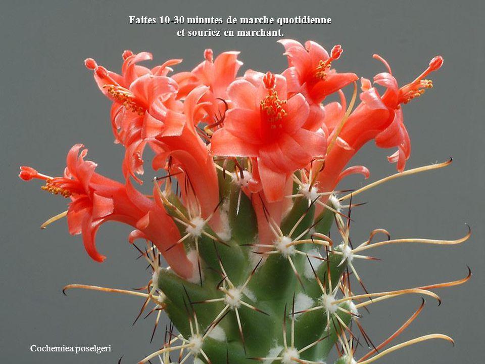 Escobaria minima Rêvez tout éveillé.
