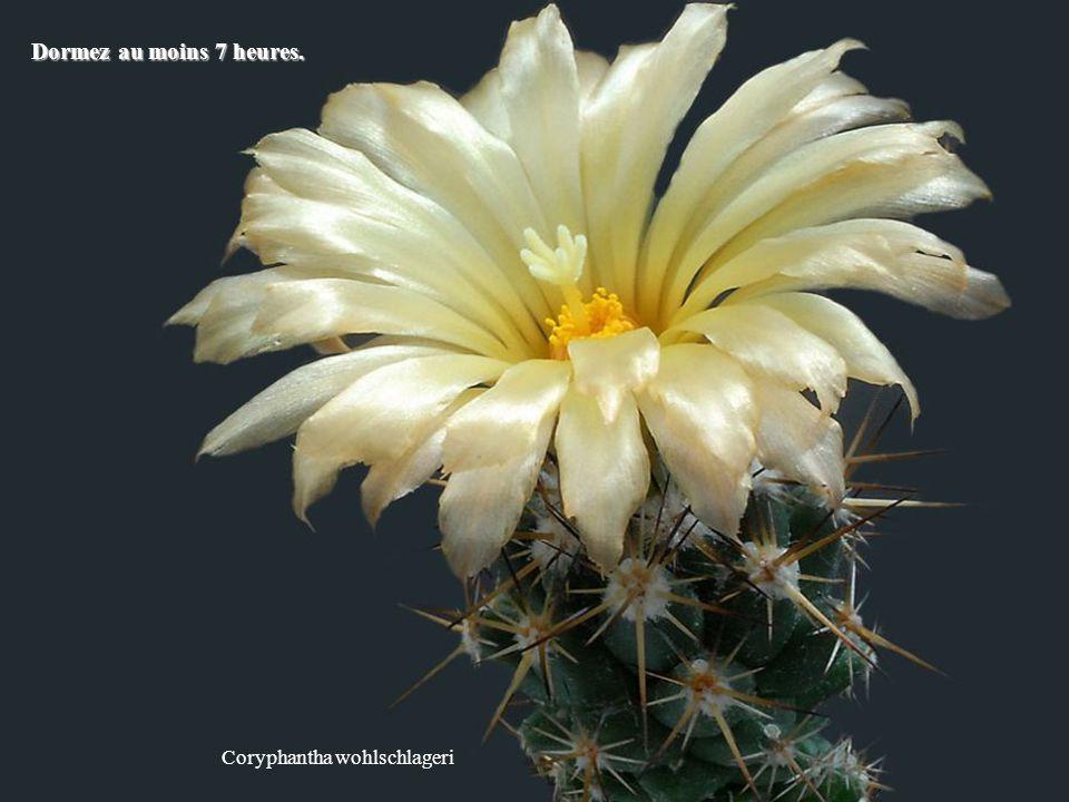 Ferobergia hybride Faites la paix avec le passé pour vivre pleinement le présent.