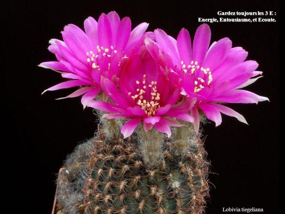 Mammillaria albiflora Ne dépensez pas votre énergie en paroles inutiles. en paroles inutiles.