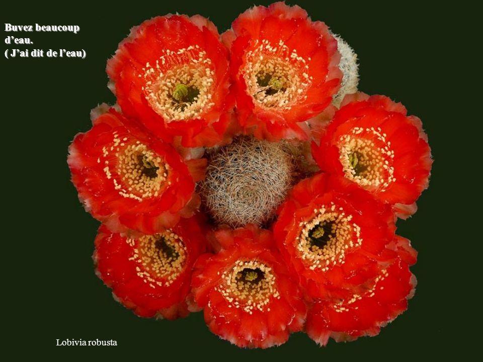 Copiapoa tenuissima Aussi difficle que soit la situation elle ne pourra que s'améliorer.