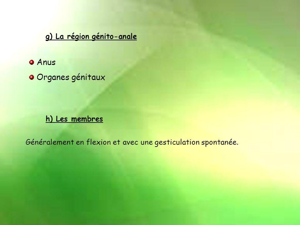 d) Le thorax. Écoulement blanchâtre au niveau des glandes mammaires. e) Le dos Rachis rectiligne. f ) L'abdomen Volumineux et mobile à la respiration.