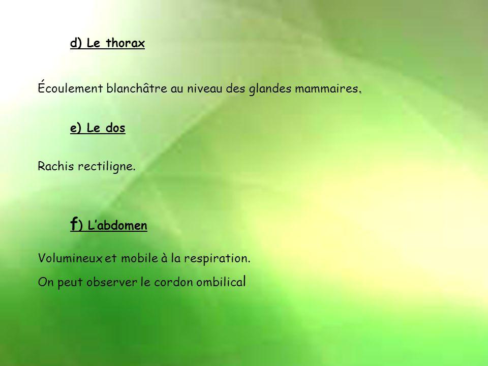 d) Le thorax.Écoulement blanchâtre au niveau des glandes mammaires.
