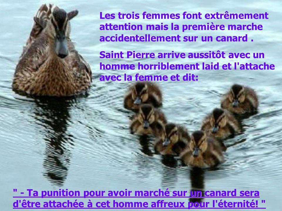 Les trois femmes font extrêmement attention mais la première marche accidentellement sur un canard.