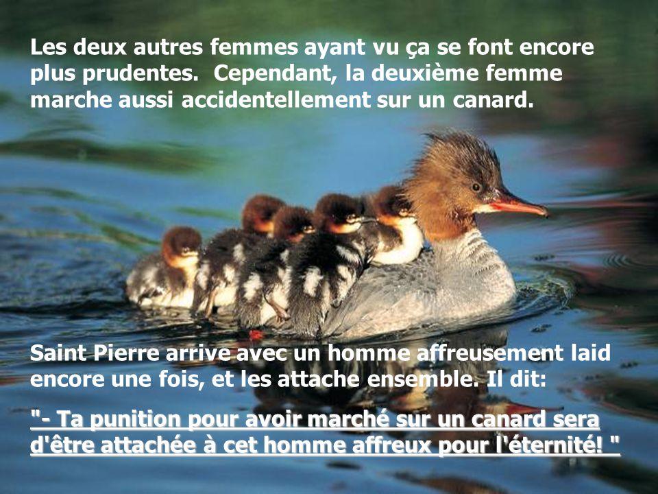 Les trois femmes font extrêmement attention mais la première marche accidentellement sur un canard. Saint Pierre arrive aussitôt avec un homme horribl