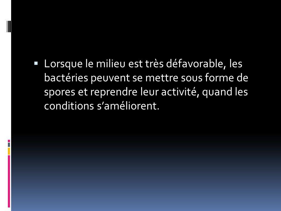  Lorsque le milieu est très défavorable, les bactéries peuvent se mettre sous forme de spores et reprendre leur activité, quand les conditions s'amél