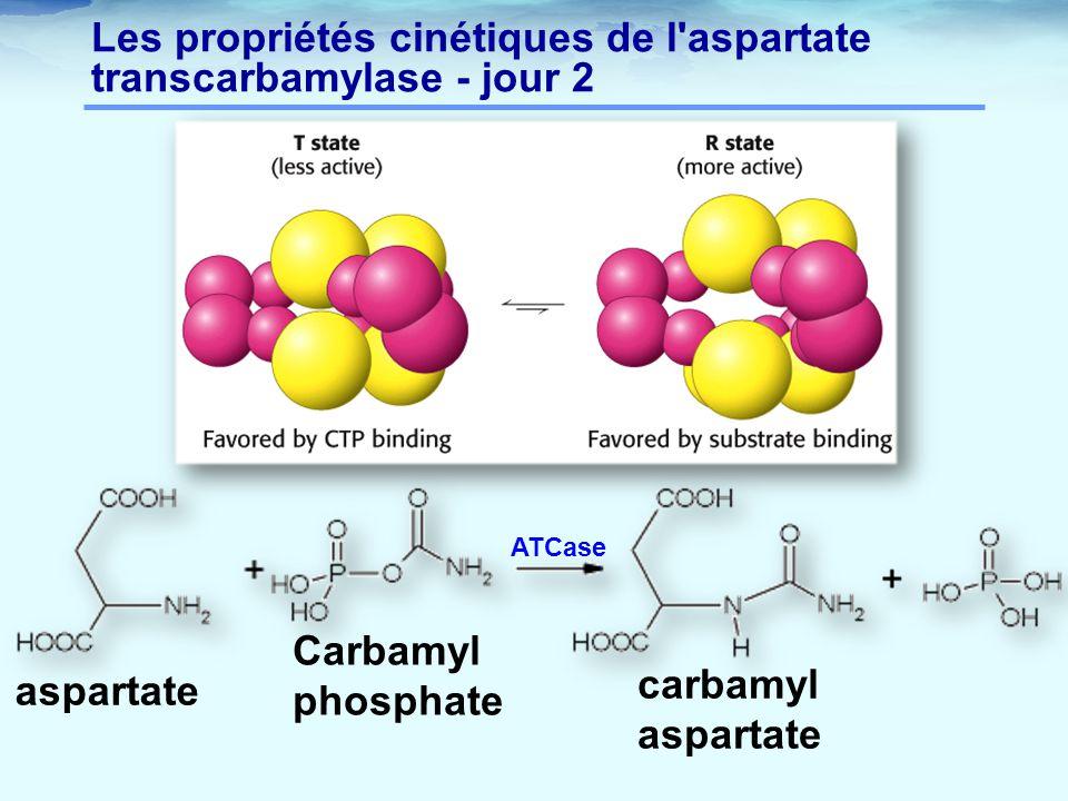 Les propriétés cinétiques de l'aspartate transcarbamylase - jour 2 aspartate Carbamyl phosphate carbamyl aspartate ATCase