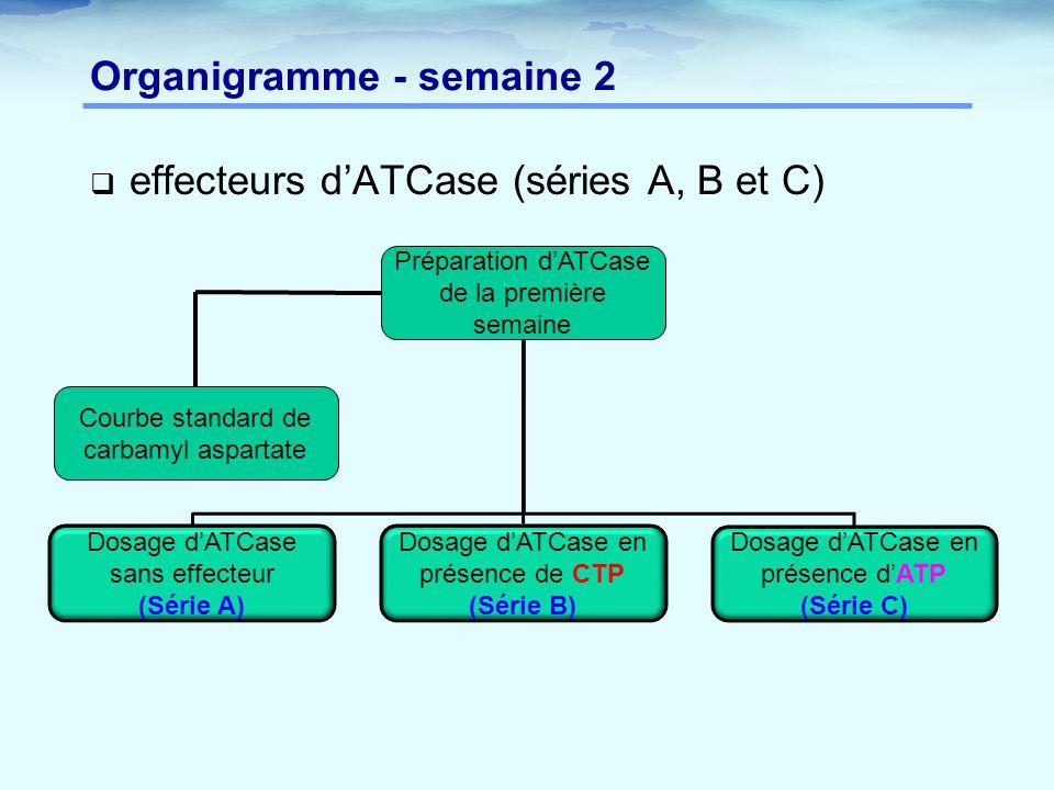 Organigramme - semaine 2  effecteurs d'ATCase (séries A, B et C) Préparation d'ATCase de la première semaine Dosage d'ATCase sans effecteur (Série A)