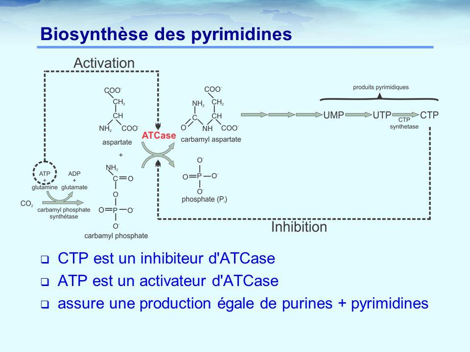  CTP est un inhibiteur d'ATCase  ATP est un activateur d'ATCase  assure une production égale de purines + pyrimidines Biosynthèse des pyrimidines