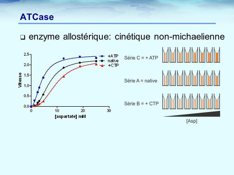 ATCase  enzyme allostérique: cinétique non-michaelienne