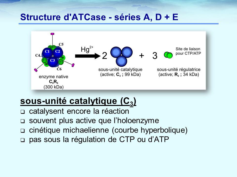 Structure d'ATCase - séries A, D + E sous-unité catalytique (C 3 )  catalysent encore la réaction  souvent plus active que l'holoenzyme  cinétique