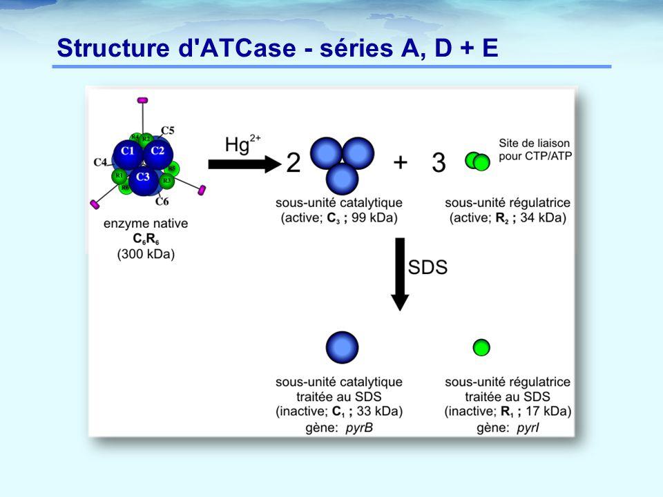 Structure d'ATCase - séries A, D + E