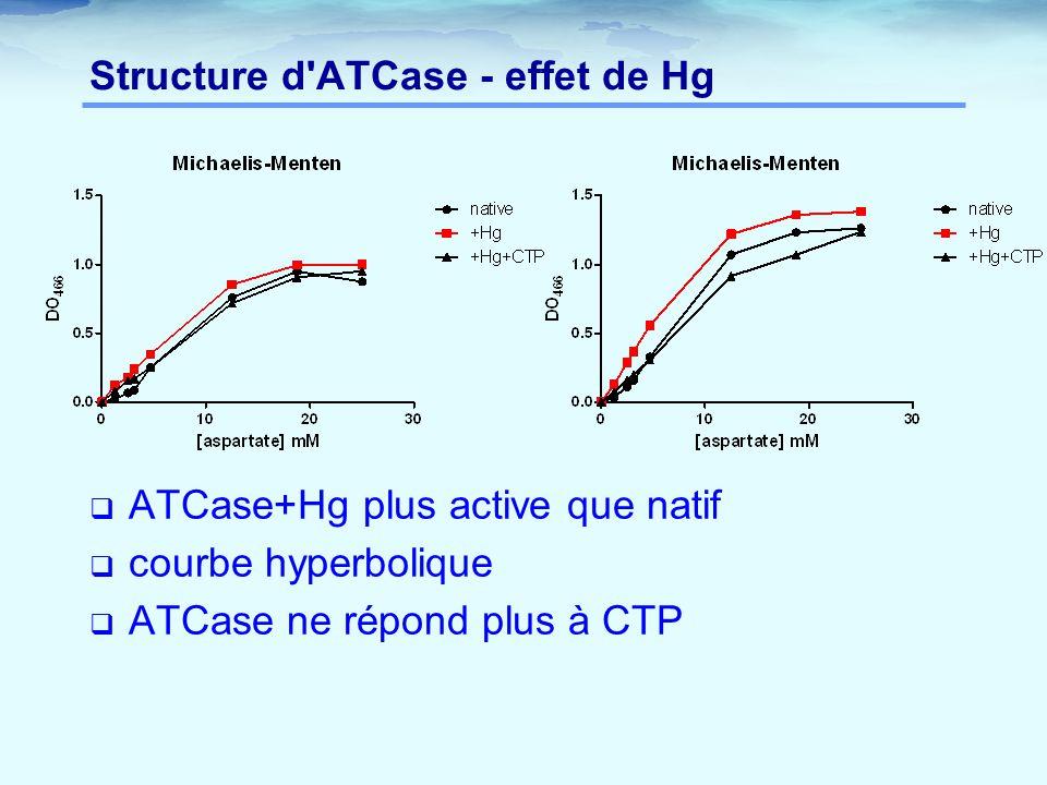 Structure d'ATCase - effet de Hg  ATCase+Hg plus active que natif  courbe hyperbolique  ATCase ne répond plus à CTP
