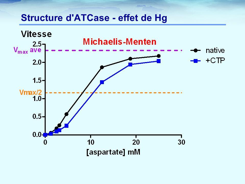Structure d'ATCase - effet de Hg