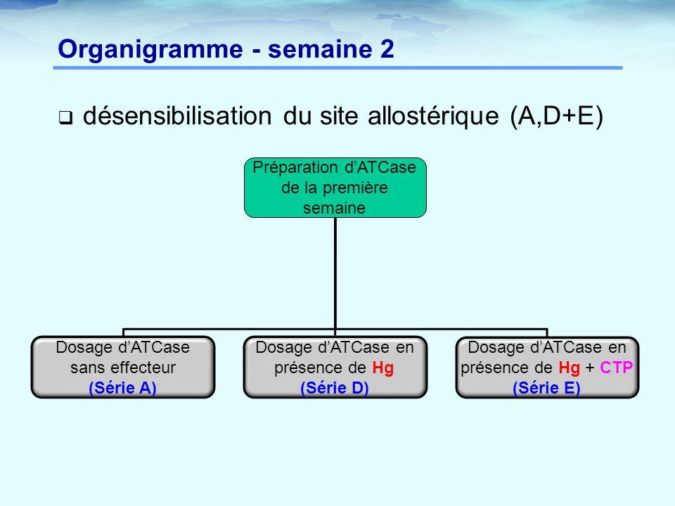 Organigramme - semaine 2  désensibilisation du site allostérique (A,D+E) Préparation d'ATCase de la première semaine Dosage d'ATCase sans effecteur (