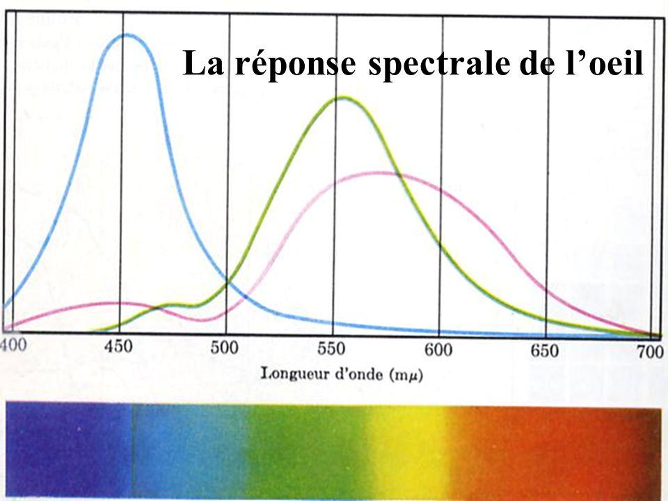 La réponse spectrale de l'oeil
