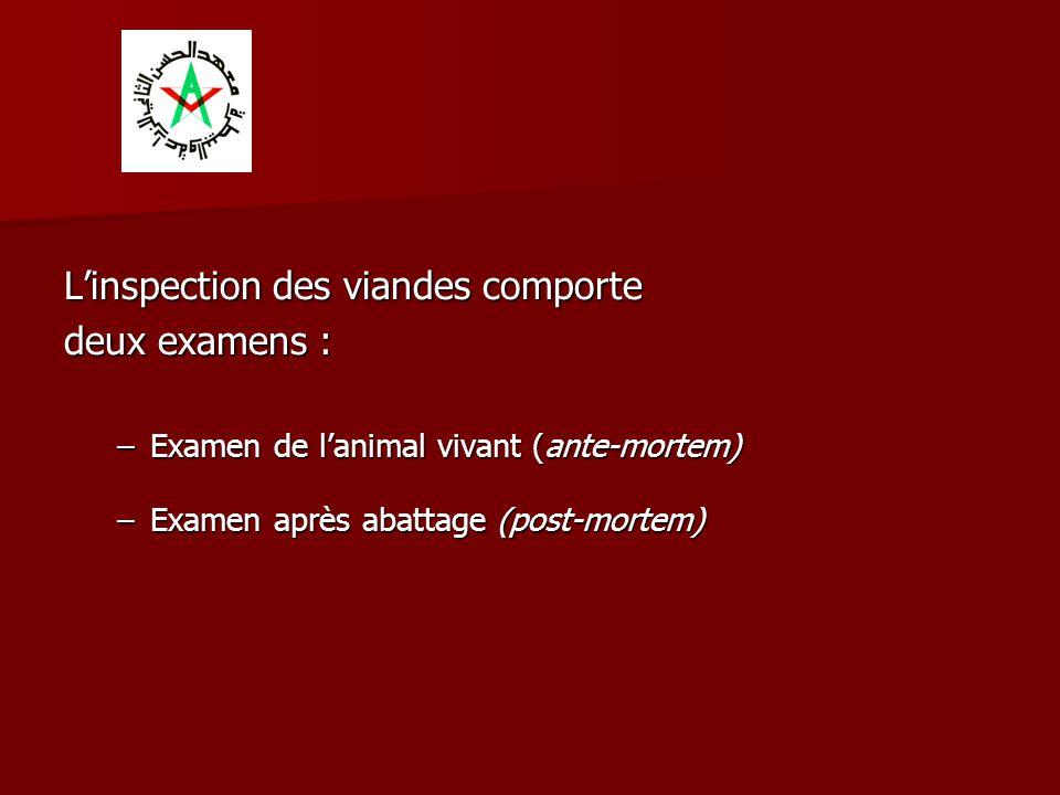 L'inspection des viandes comporte deux examens : –Examen de l'animal vivant (ante-mortem) –Examen après abattage (post-mortem)