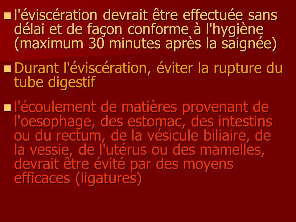 l'éviscération devrait être effectuée sans délai et de façon conforme à l'hygiène (maximum 30 minutes après la saignée) l'éviscération devrait être ef