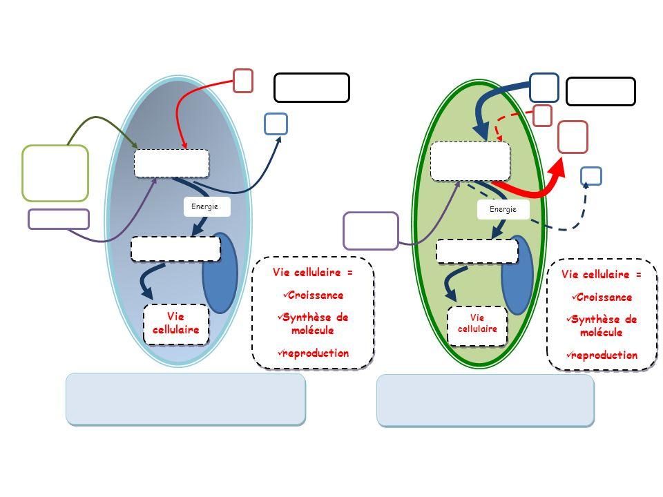 Vie cellulaire Energie Vie cellulaire = Croissance Synthèse de molécule reproduction Vie cellulaire = Croissance Synthèse de molécule reproduction Vie