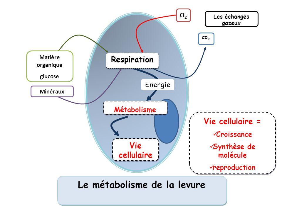 Le métabolisme de la levure C0 2 Matière organique glucose O2O2 Vie cellulaire Minéraux Les échanges gazeux Energie Respiration Métabolisme Vie cellul