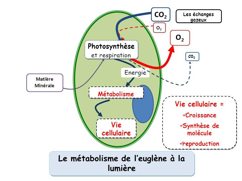 Le métabolisme de l'euglène à la lumière O2O2 CO 2 Vie cellulaire Matière Minérale Les échanges gazeux Energie Photosynthèse Métabolisme Vie cellulair