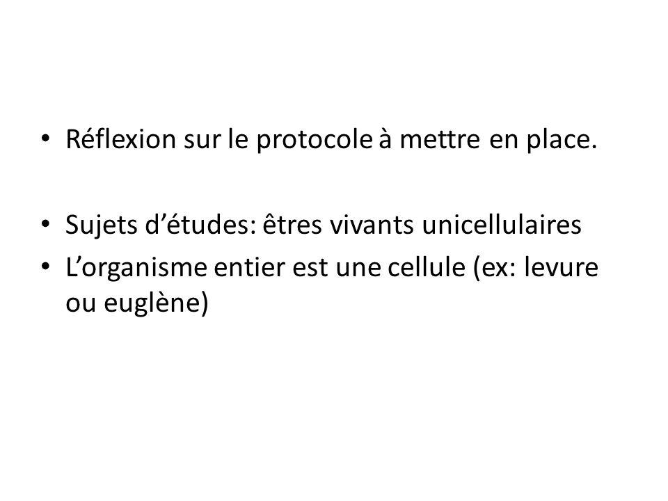 Réflexion sur le protocole à mettre en place. Sujets d'études: êtres vivants unicellulaires L'organisme entier est une cellule (ex: levure ou euglène)