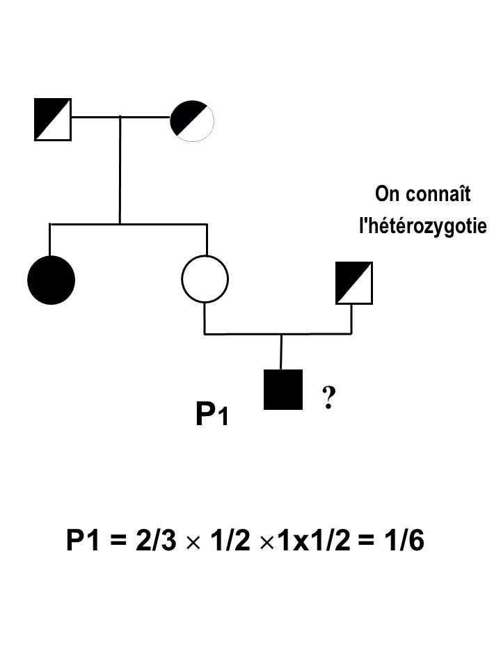 P1P1 P1 = 2/3  1/2  1x1/2 = 1/6 ? On connaît l'hétérozygotie