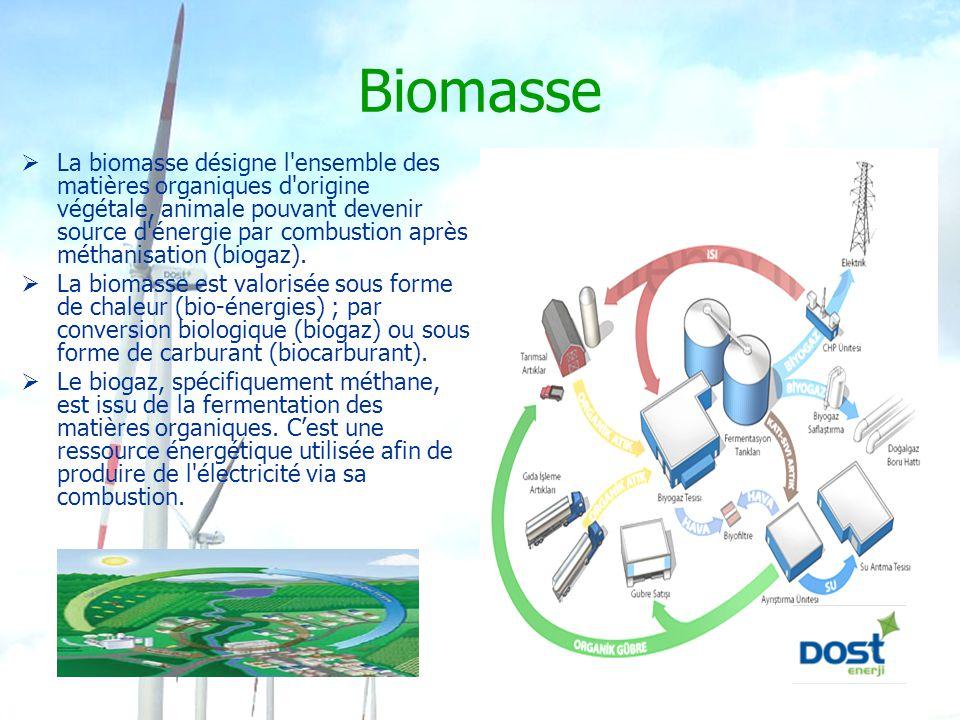 Biomasse  La biomasse désigne l'ensemble des matières organiques d'origine végétale, animale pouvant devenir source d'énergie par combustion après mé