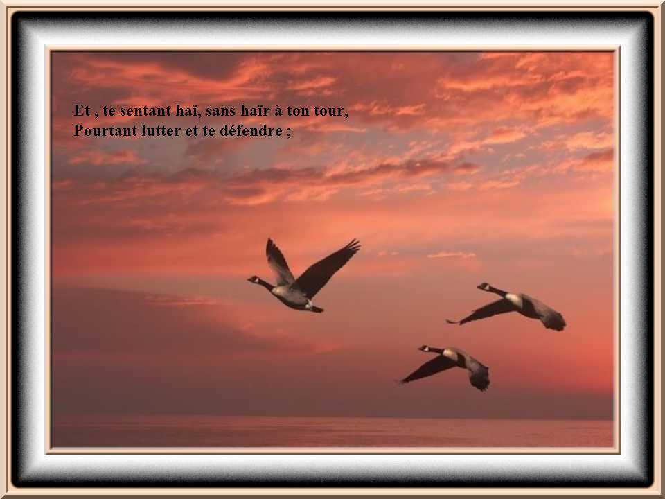 Si tu peux être dur sans jamais être en rage, Si tu peux être brave et jamais imprudent,
