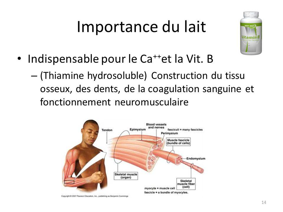 Importance du lait Indispensable pour le Ca ++ et la Vit. B – (Thiamine hydrosoluble) Construction du tissu osseux, des dents, de la coagulation sangu