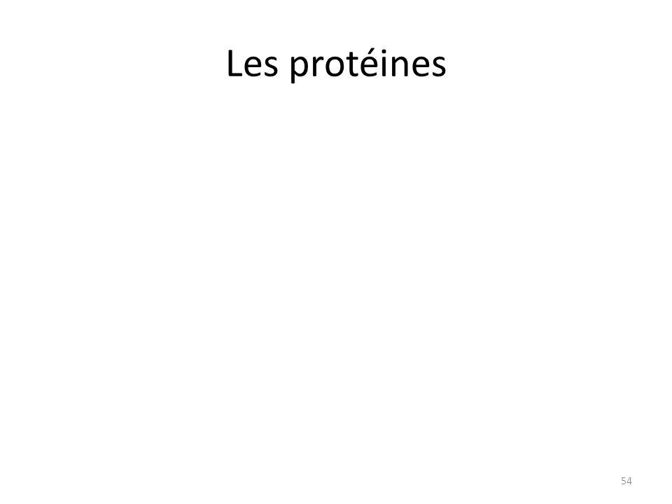 Les protéines 54