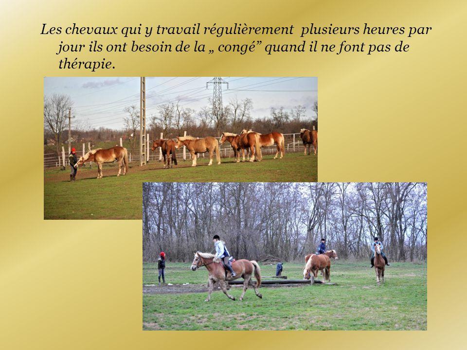 """Les chevaux qui y travail régulièrement plusieurs heures par jour ils ont besoin de la """" congé quand il ne font pas de thérapie."""