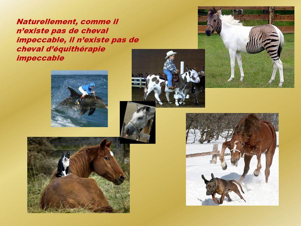Naturellement, comme il n'existe pas de cheval impeccable, il n'existe pas de cheval d'équithérapie impeccable