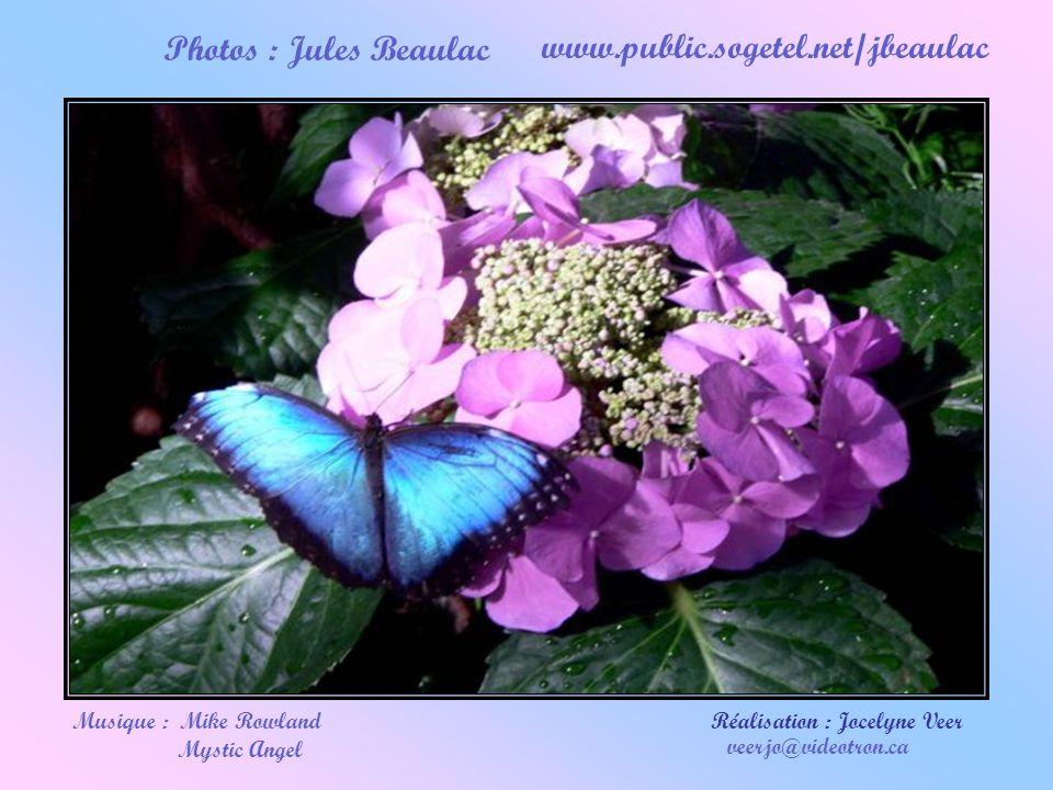 Être capable de tout sacrifier, sauf l'amour ! Texte : pris sur le site Évangélisation 2000 www.evangelisation2000.org