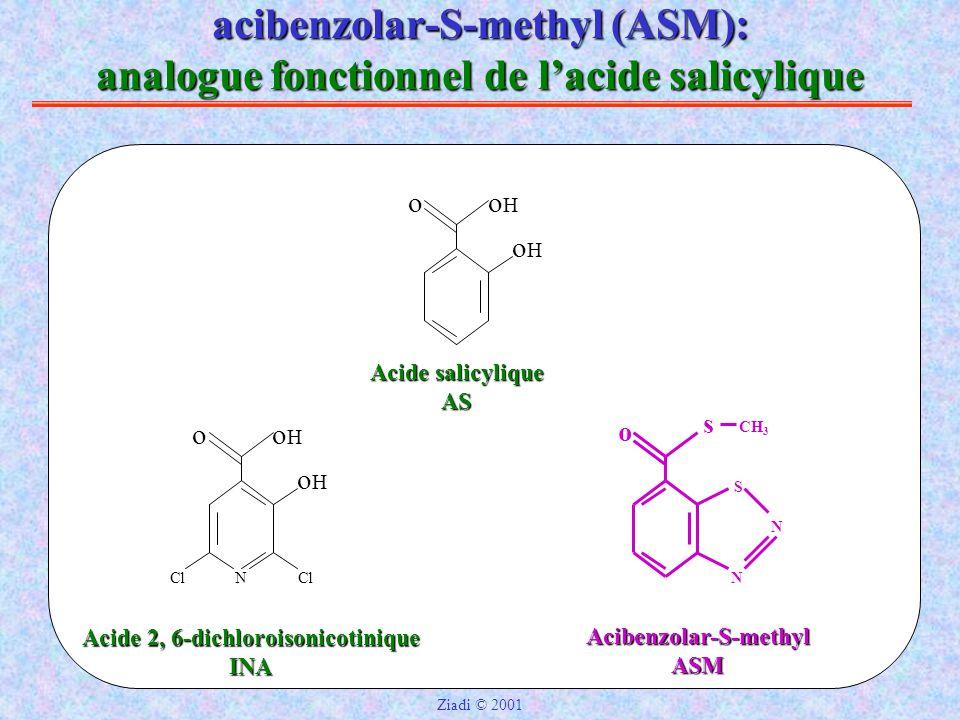 acibenzolar-S-methyl (ASM): analogue fonctionnel de l'acide salicylique Acide salicylique AS ooHoH oHoH Acide 2, 6-dichloroisonicotinique INA ooHoH oHoH NCl Acibenzolar-S-methylASM o s N N S CH 3 Ziadi © 2001