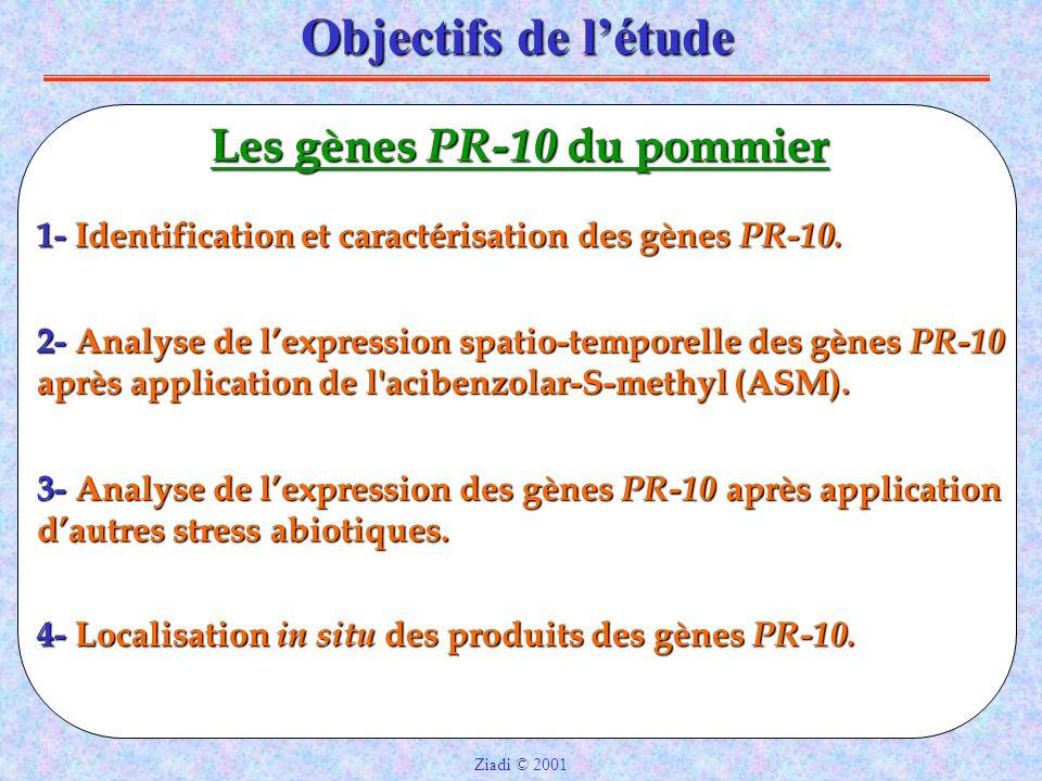 Objectifs de l'étude 1- Identification et caractérisation des gènes PR-10.