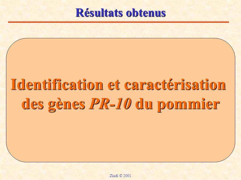 Résultats obtenus Identification et caractérisation des gènes PR-10 du pommier Ziadi © 2001