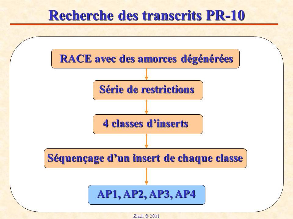 Recherche des transcrits PR-10 RACE avec des amorces dégénérées Série de restrictions 4 classes d'inserts Séquençage d'un insert de chaque classe AP1, AP2, AP3, AP4 Ziadi © 2001