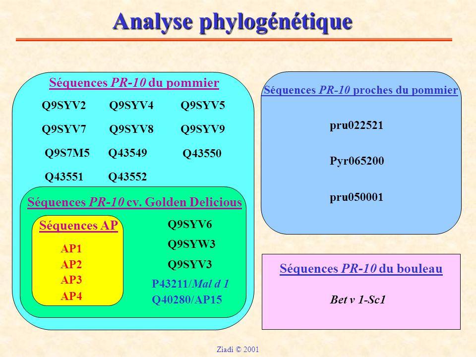 Analyse phylogénétique Séquences PR-10 du pommier Séquences PR-10 du bouleau Séquences PR-10 cv.