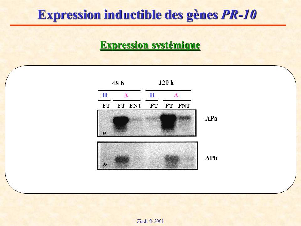 Expression inductible des gènes PR-10 Expression systémique FT FNT HHAA 48 h 120 h APa APb Ziadi © 2001