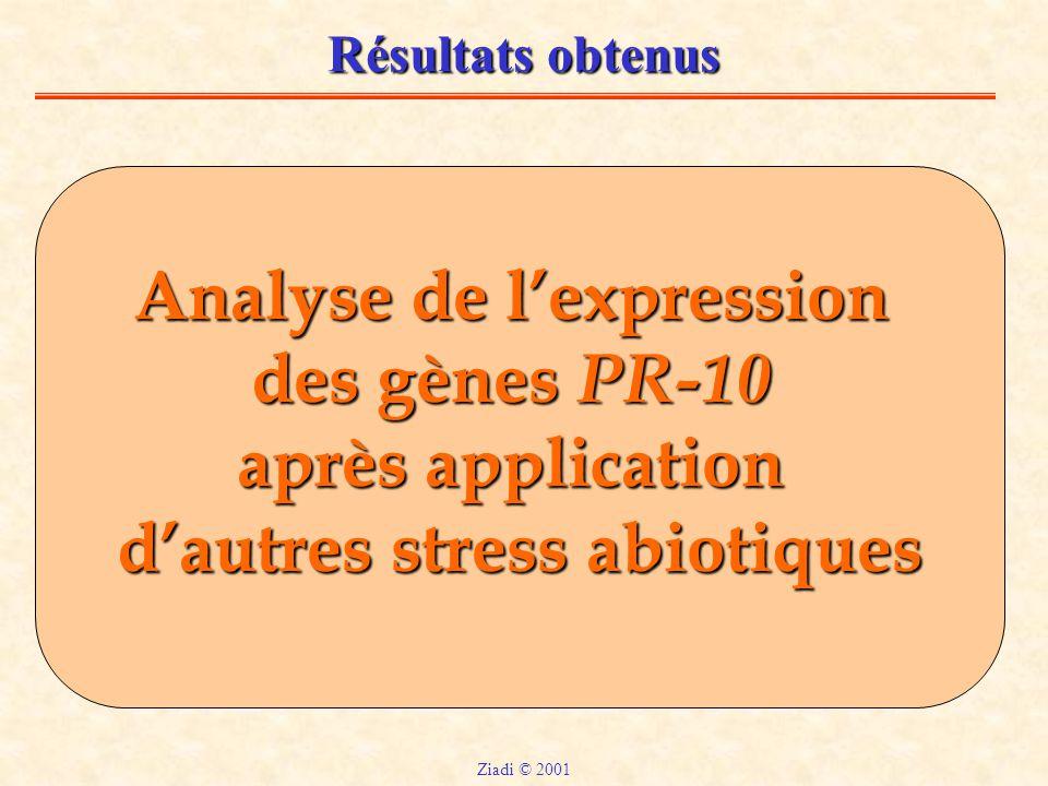 Résultats obtenus Analyse de l'expression des gènes PR-10 après application d'autres stress abiotiques Ziadi © 2001