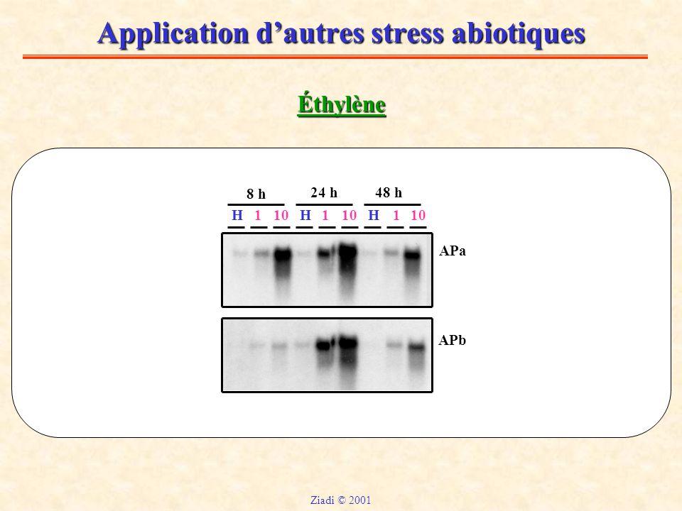 Application d'autres stress abiotiques Éthylène HHH110 11 8 h 24 h48 h APa APb Ziadi © 2001