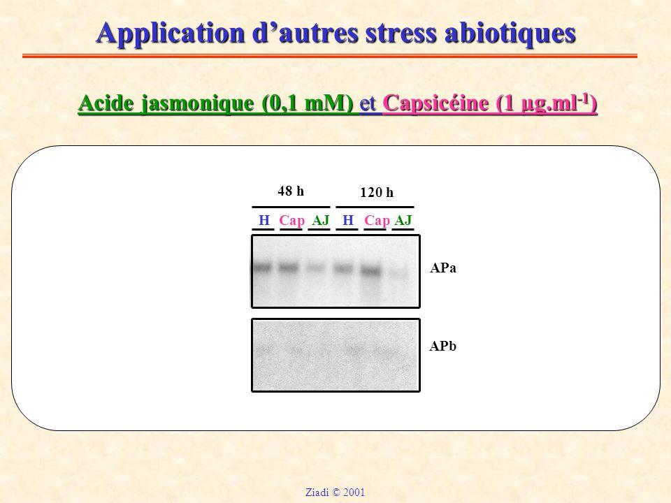 Application d'autres stress abiotiques Acide jasmonique (0,1 mM) et Capsicéine (1 µg.ml -1 ) HHCapAJ Cap 48 h 120 h APa APb Ziadi © 2001