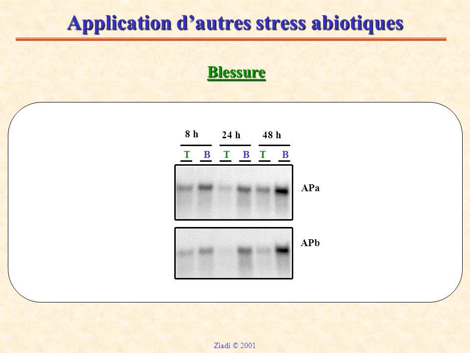 Application d'autres stress abiotiques Blessure T APa APb TBBBT 8 h 24 h48 h Ziadi © 2001