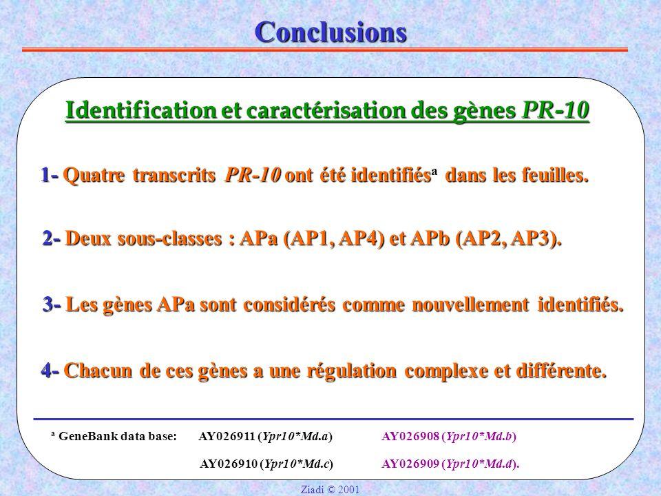 Conclusions Identification et caractérisation des gènes PR-10 2- Deux sous-classes : APa (AP1, AP4) et APb (AP2, AP3).