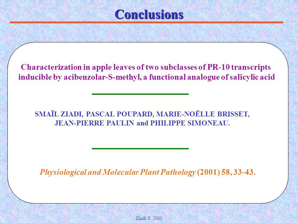 Conclusions Localisation in situ des produits des gènes PR-10 1- Les tissus conducteurs.