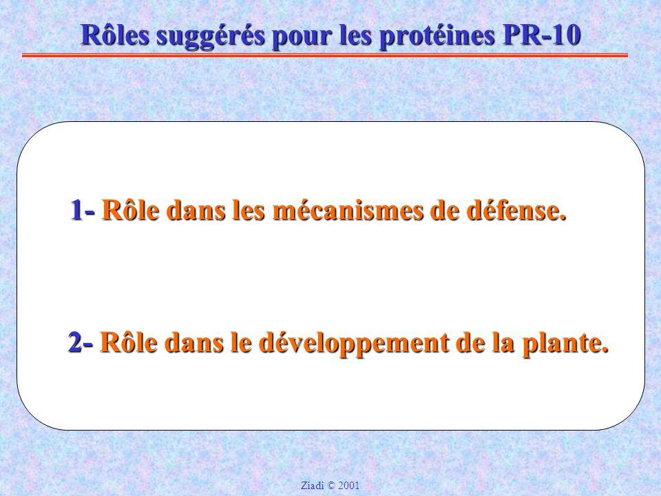 Rôles suggérés pour les protéines PR-10 2- Rôle dans le développement de la plante.