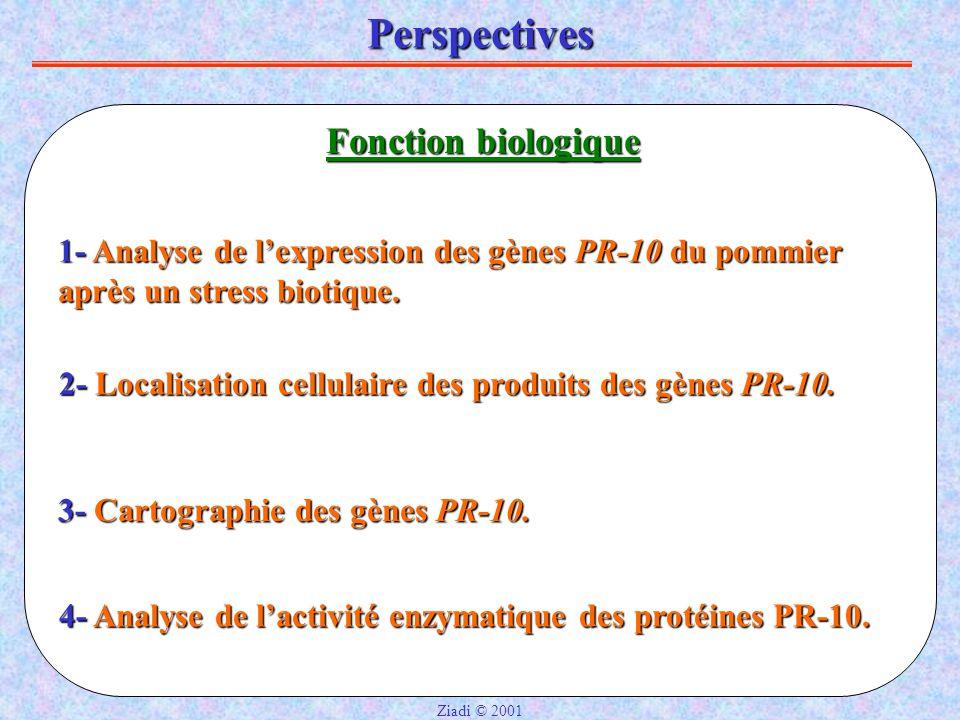 Perspectives Fonction biologique 1- Analyse de l'expression des gènes PR-10 du pommier après un stress biotique.